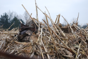 Duck Hunting Concealment
