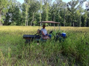 food plots for ducks