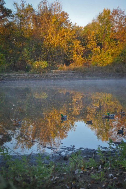 Waterfowl Hunting Forecast