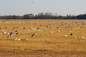 Waterfowl Scouting