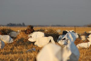 Concealment for Duck and Goose Hunting