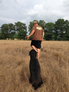 Off-Season Retriever Training