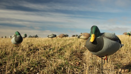 Waterfowl Migration 2013