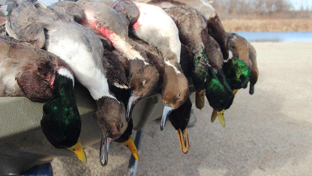 Video: Duck Hunting – Stacked Against Us