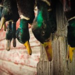 Video: The 2013-2014 Waterfowl Season – Fowled Reality 3.0