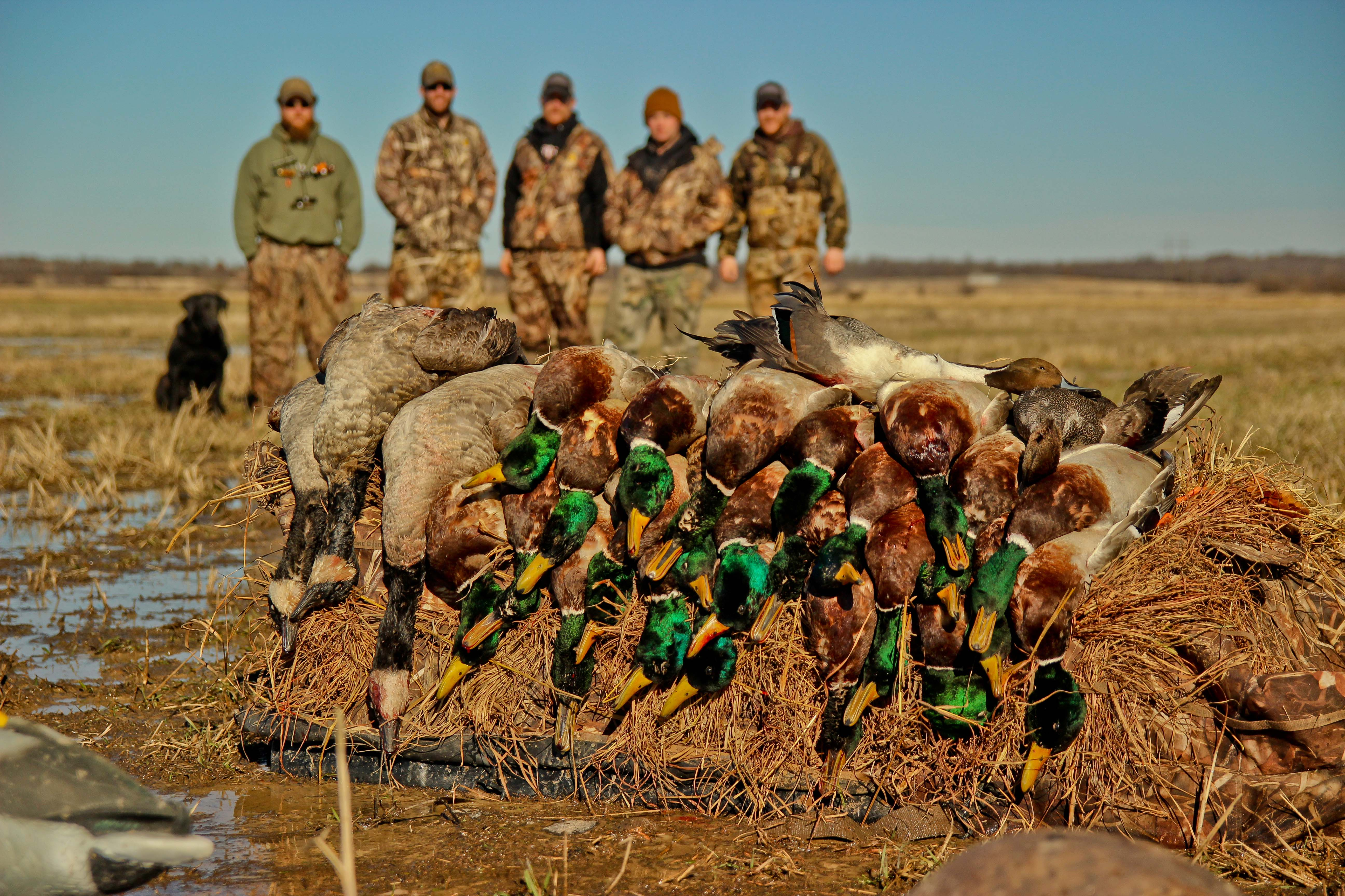 Video: Duck Hunting – A Step Behind