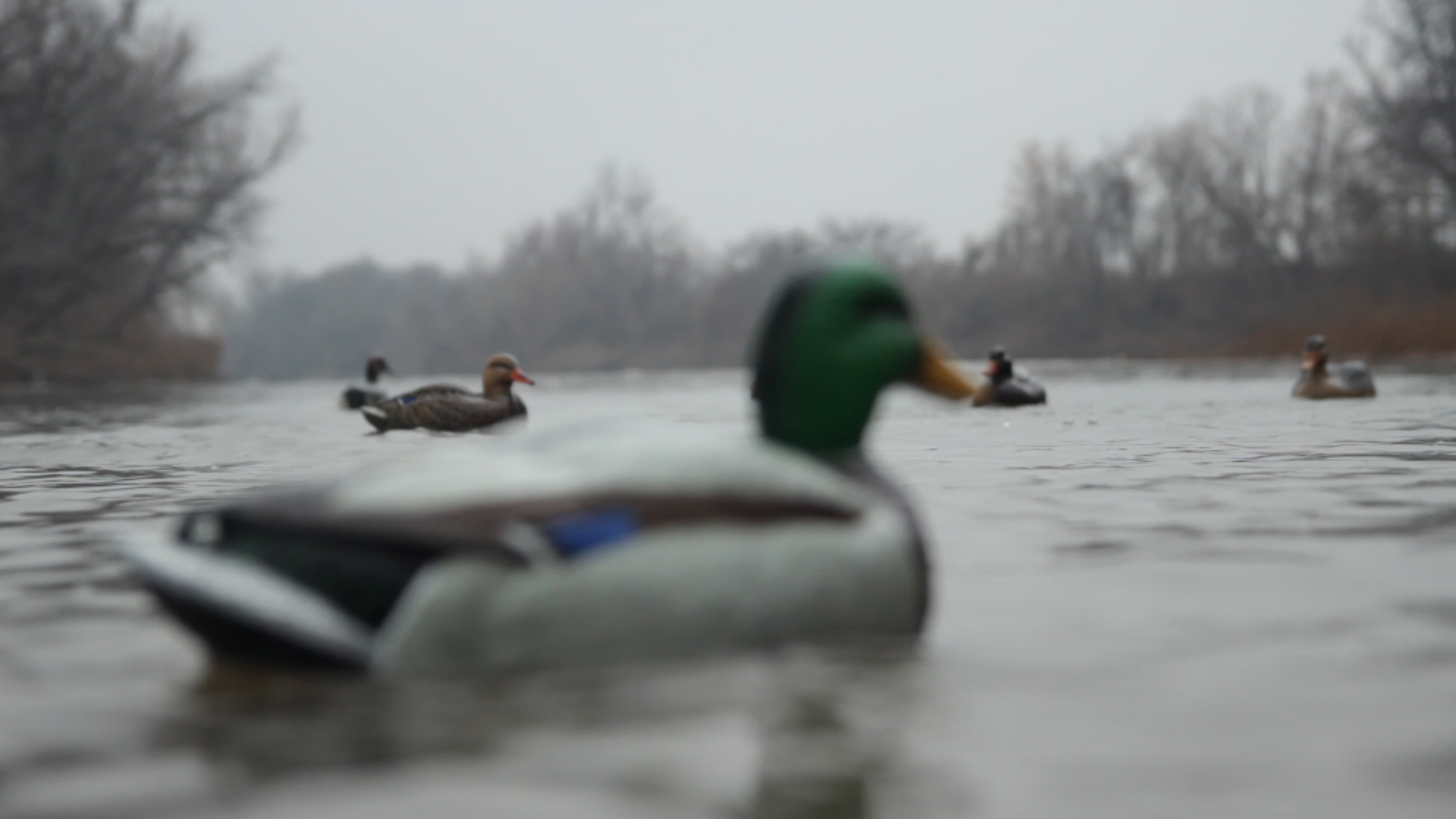 Hard Core Decoys Duck Floater Decoys