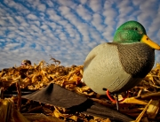 Hard Core Mallard Full Body Duck Decoys