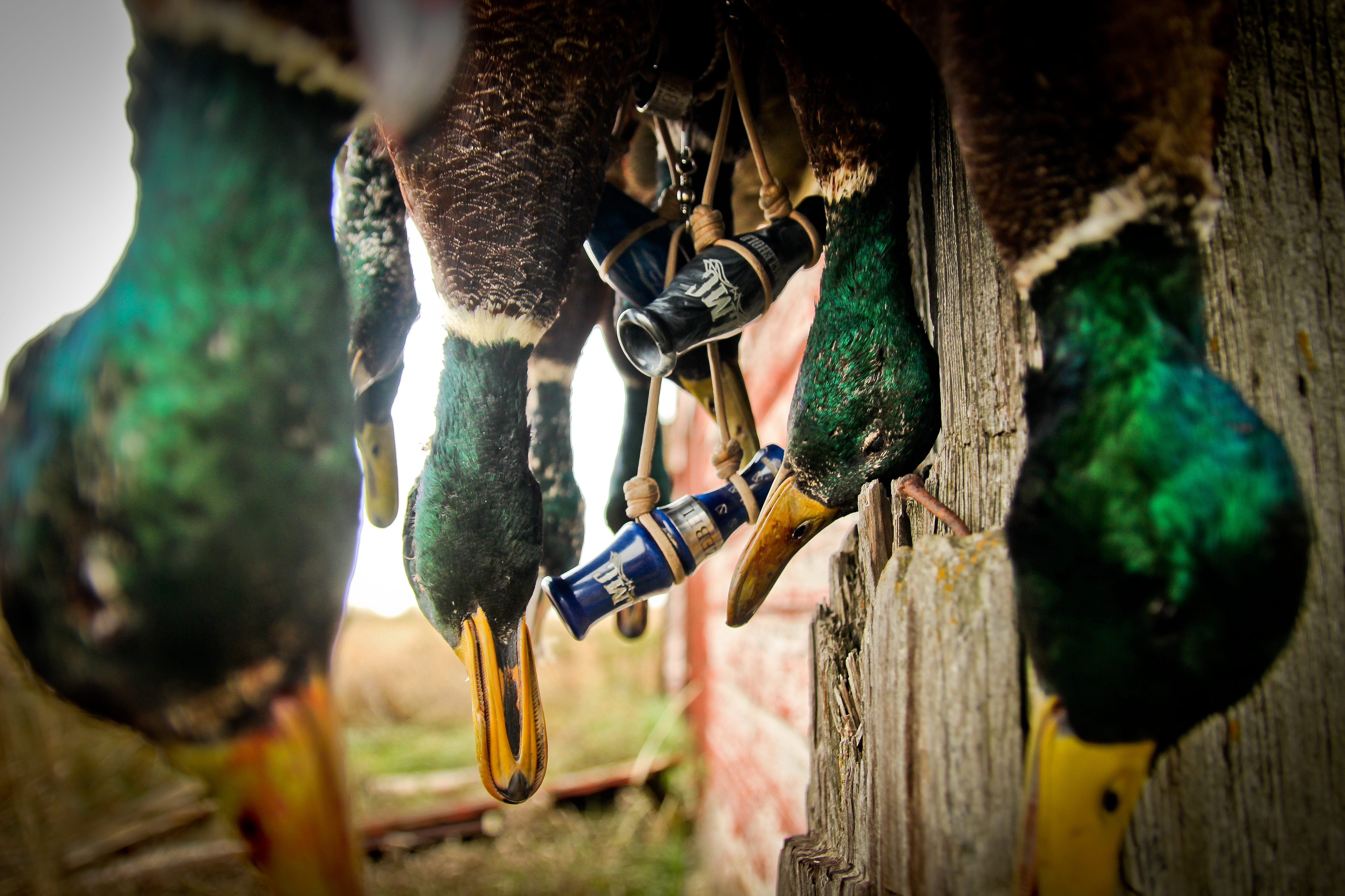 Lynch Mob Duck and Goose Calls