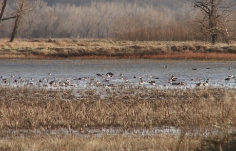 Waterfowl Migration Update – November 10, 2014