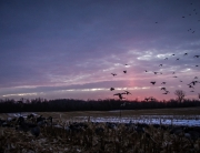 How-to hunt late season ducks
