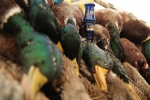 Video: Duck Hunting The Swaths