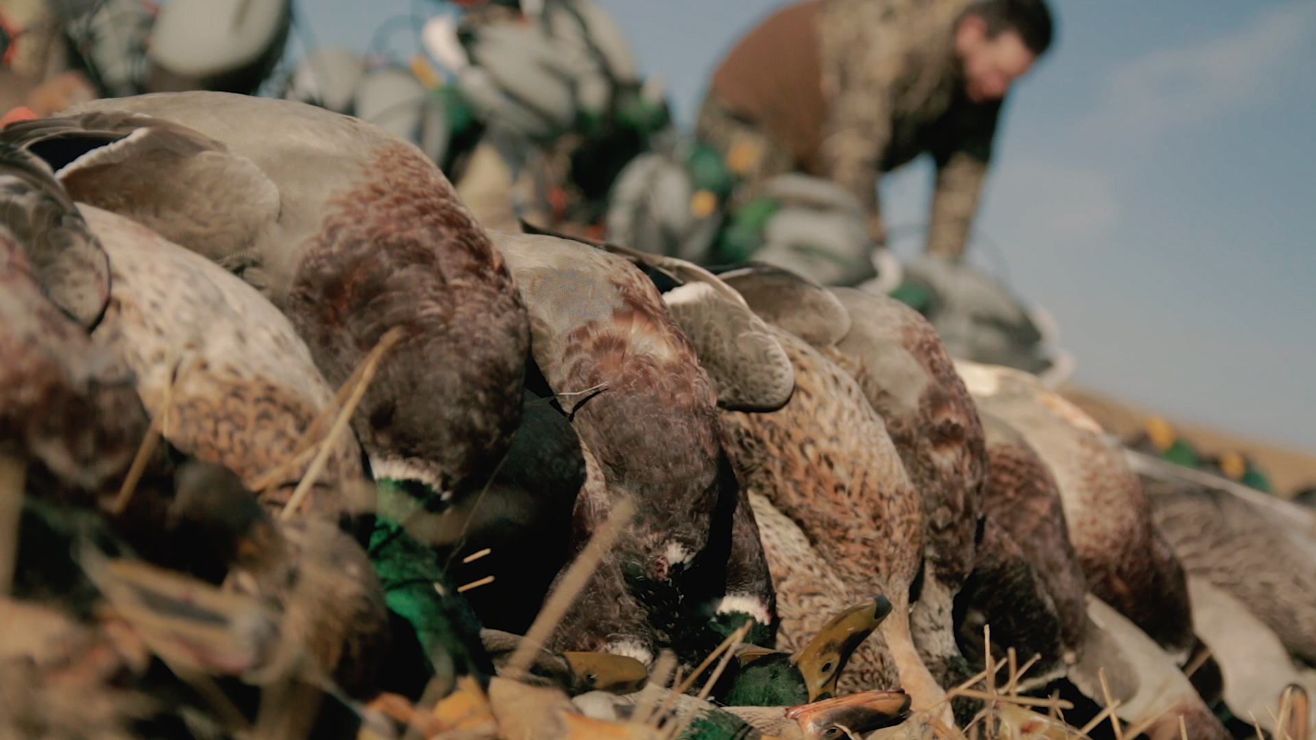 Alberta Duck Hunting Video