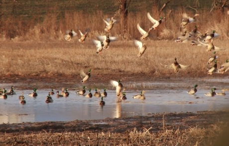 "Realtree: ""The X"" – Tips For Freelance Duck Hunting"