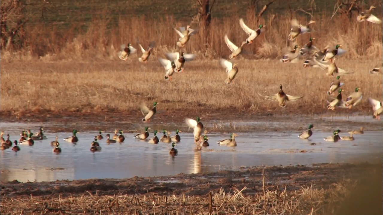 how to become a duck hunting guide