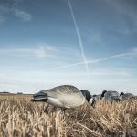 Goose Hunting Video