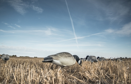 """X Marks the Spot"" – Goose Hunting"