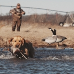 Waterfowl Hunting Video