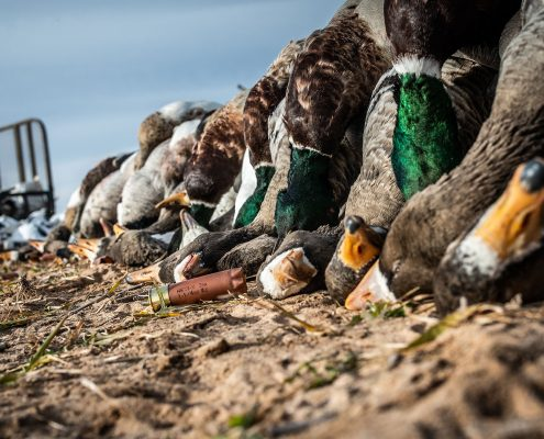 Duck Hunting Central Kansas Outfitters